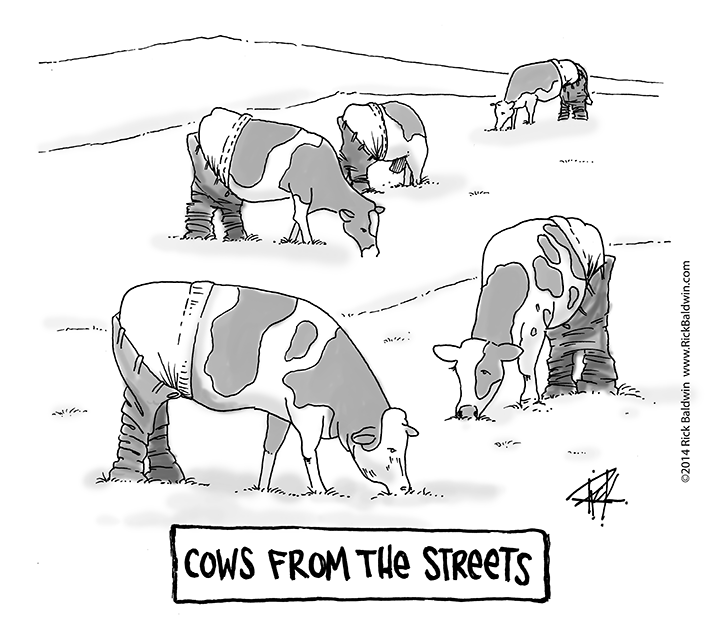 Cows From The Streets